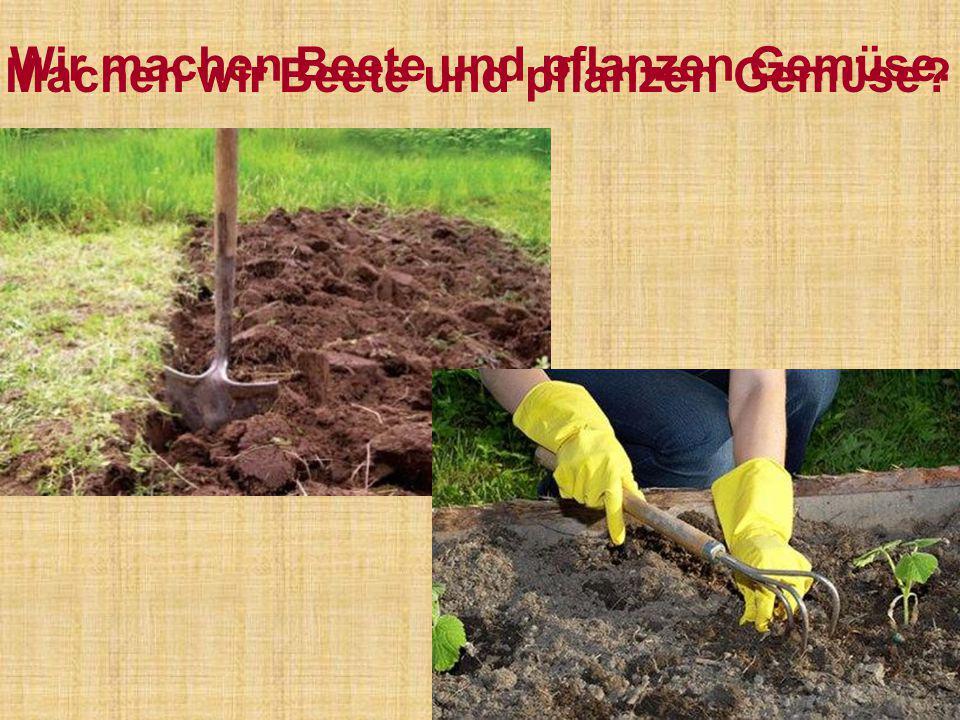 Wir machen Beete und pflanzen Gemϋse.