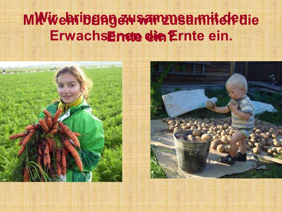 Wir bringen zusammen mit den Erwachsenen die Ernte ein.