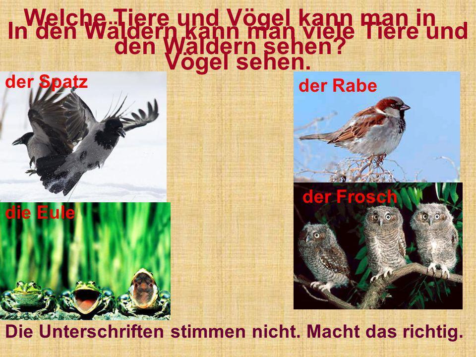 In den Wäldern kann man viele Tiere und Vögel sehen.