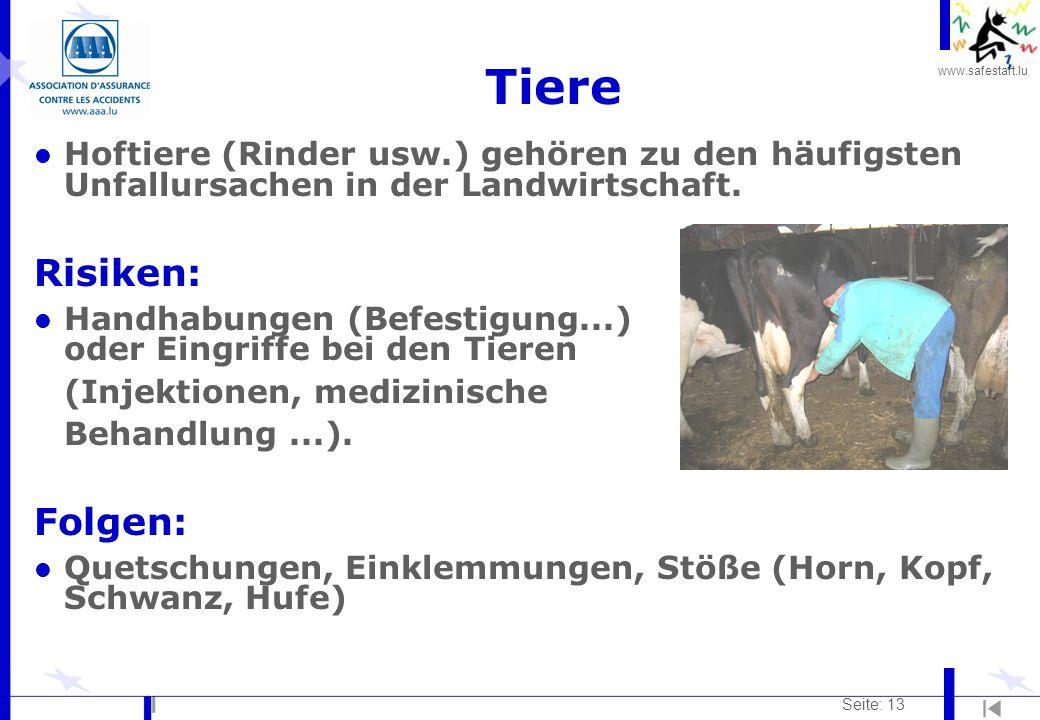 Tiere Risiken: Folgen: