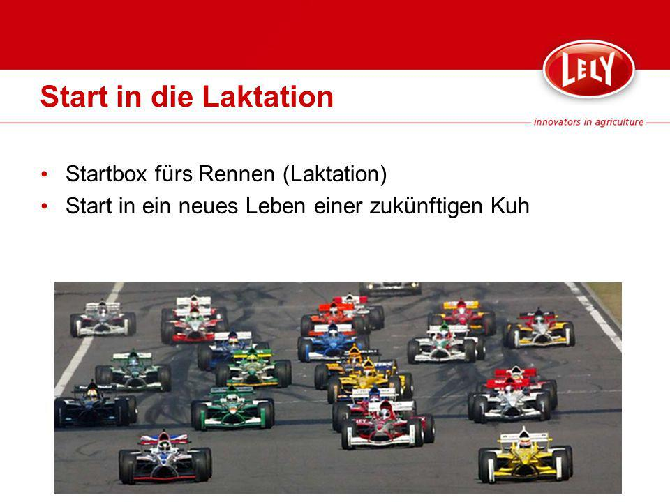 Start in die Laktation Startbox fürs Rennen (Laktation)