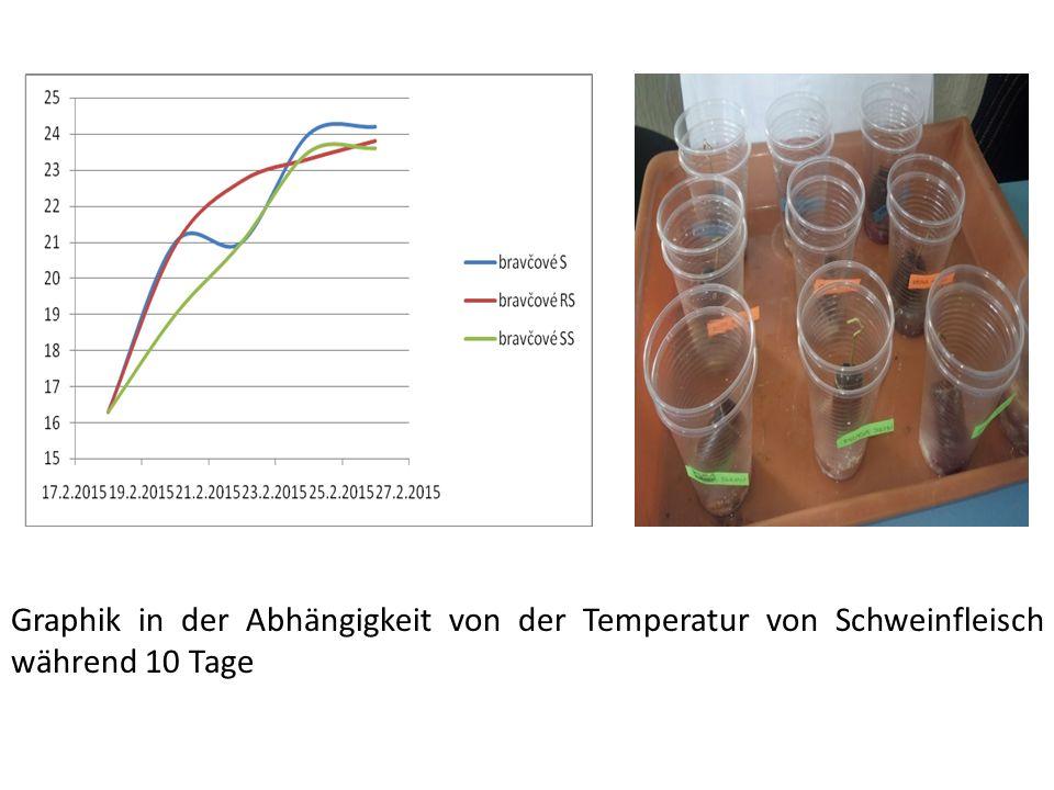 Graphik in der Abhängigkeit von der Temperatur von Schweinfleisch während 10 Tage