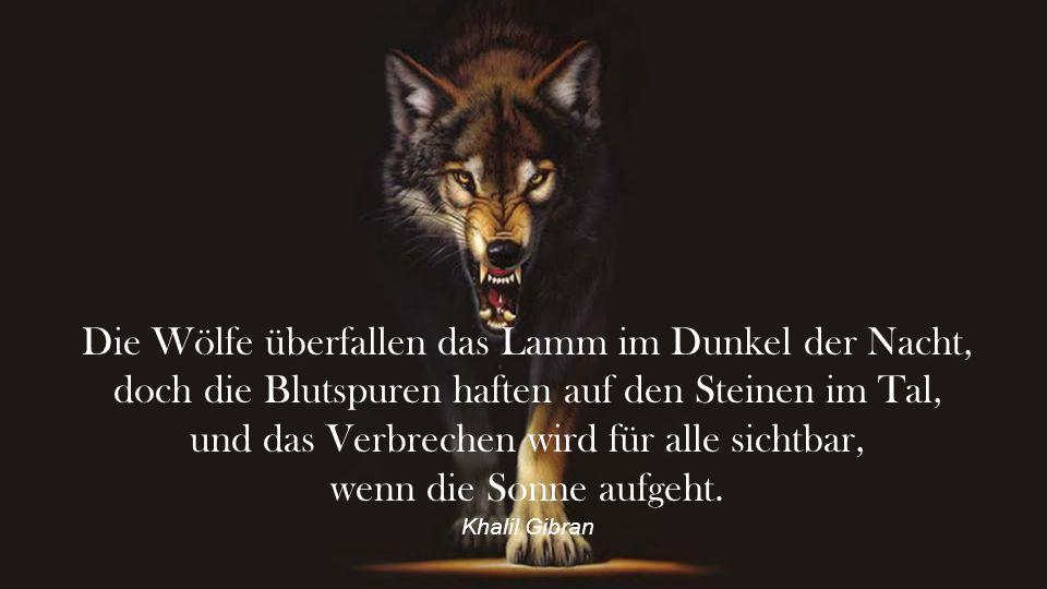 Die Wölfe überfallen das Lamm im Dunkel der Nacht,