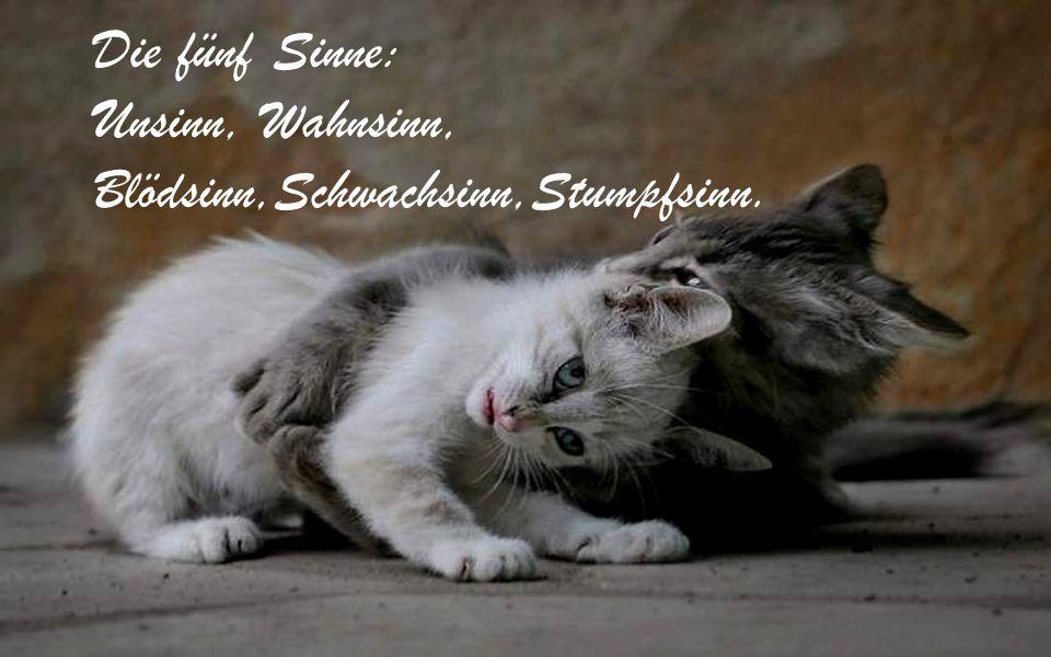 Die fünf Sinne: Unsinn, Wahnsinn, Blödsinn,Schwachsinn,Stumpfsinn.