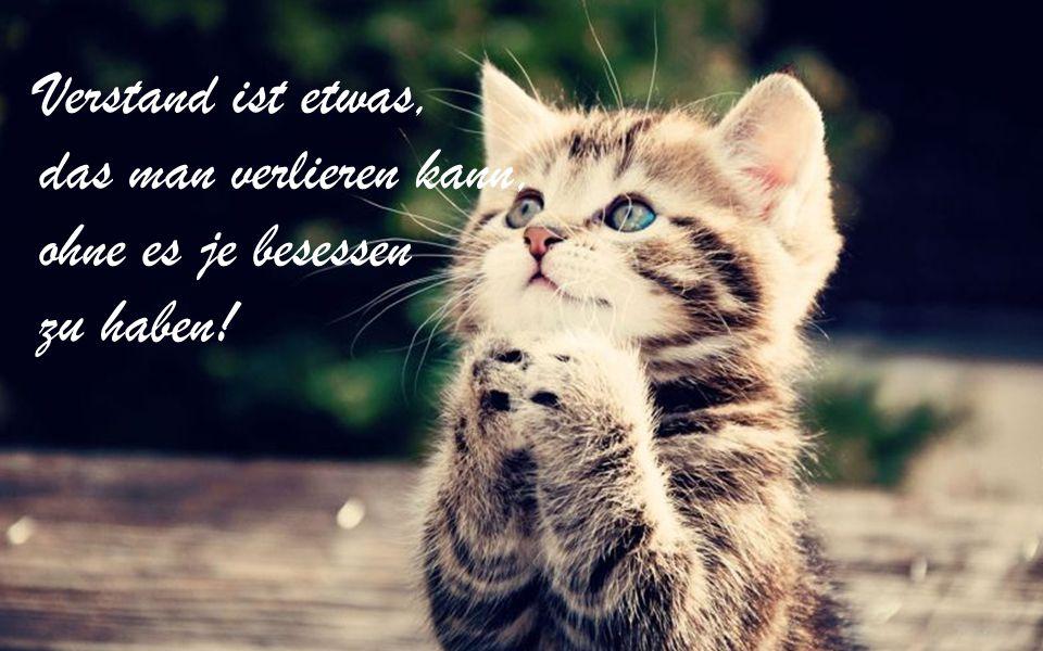 Verstand ist etwas, das man verlieren kann, ohne es je besessen zu haben!