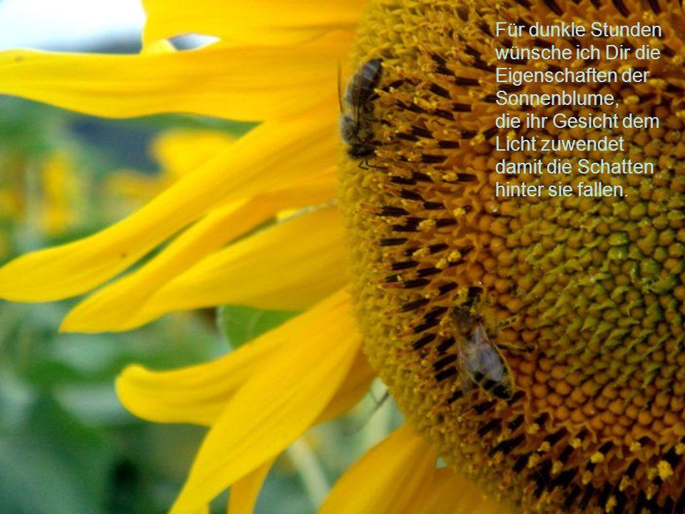Für dunkle Stunden wünsche ich Dir die Eigenschaften der Sonnenblume, die ihr Gesicht dem Licht zuwendet damit die Schatten hinter sie fallen.