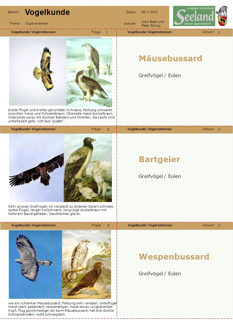 Mäusebussard Bartgeier Wespenbussard Greifvögel / Eulen
