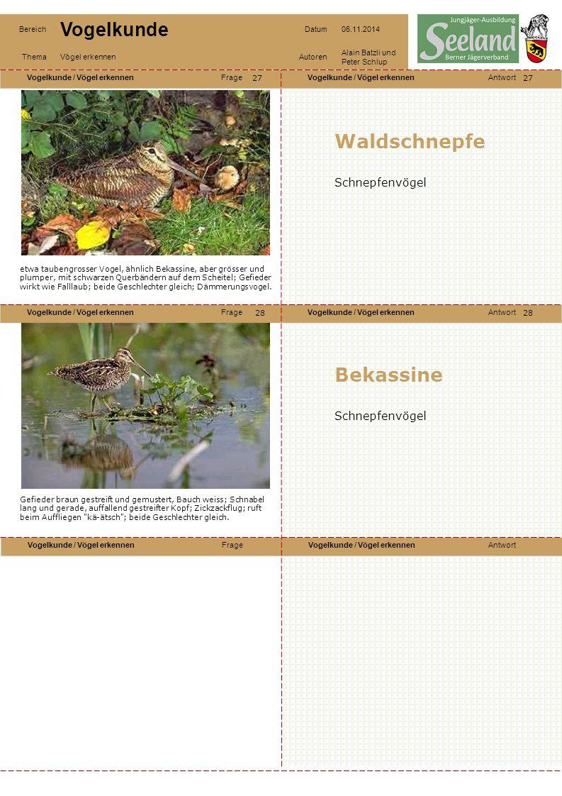 Waldschnepfe Bekassine Schnepfenvögel Schnepfenvögel 27 27