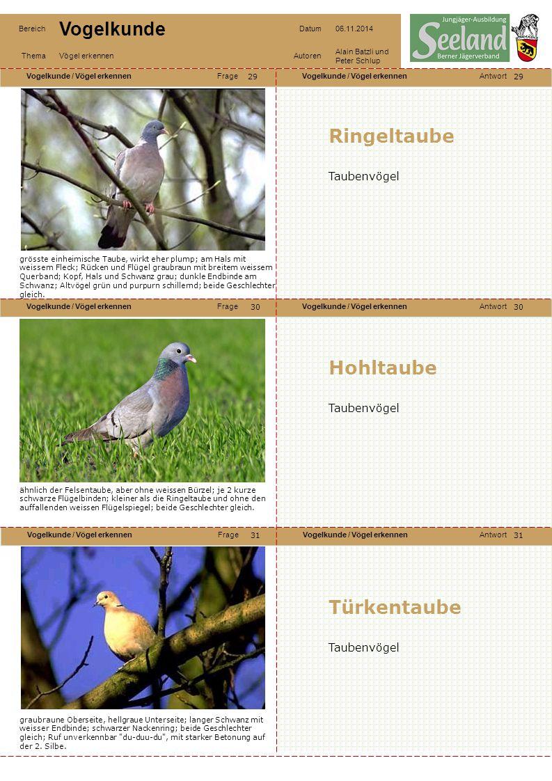 Ringeltaube Hohltaube Türkentaube Taubenvögel Taubenvögel Taubenvögel