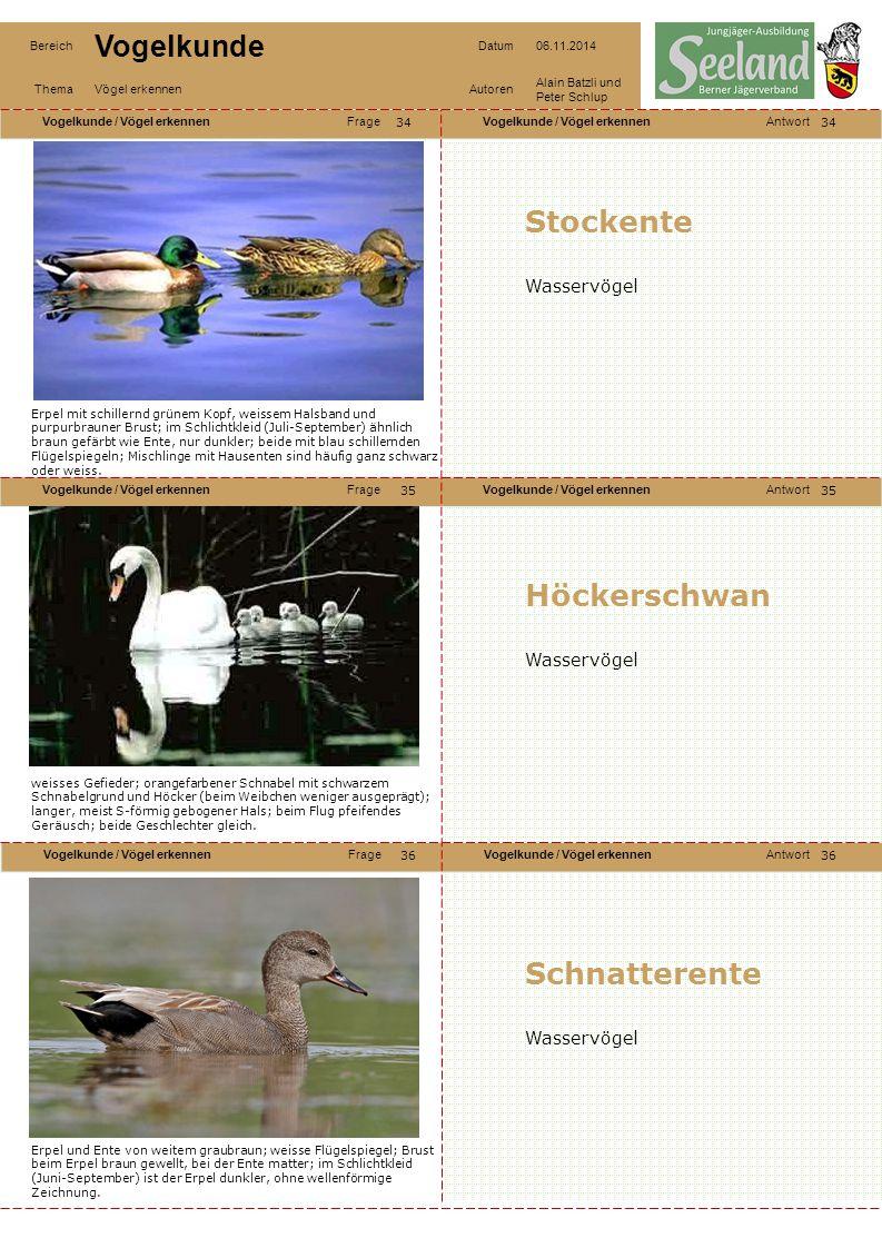 Stockente Höckerschwan Schnatterente Wasservögel Wasservögel