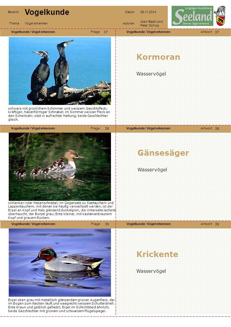 Kormoran Gänsesäger Krickente Wasservögel Wasservögel Wasservögel 37