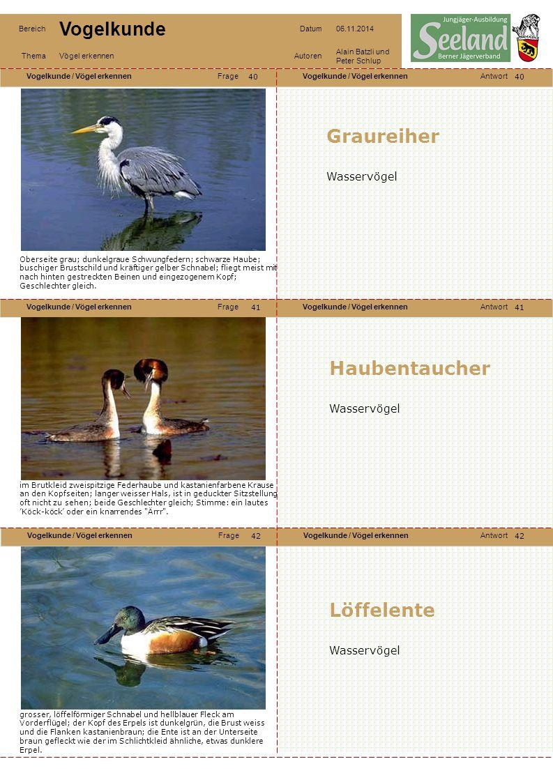 Graureiher Haubentaucher Löffelente Wasservögel Wasservögel