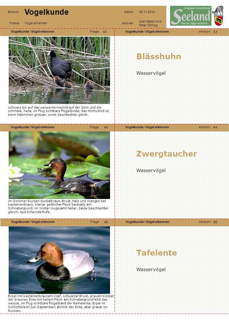 Blässhuhn Zwergtaucher Tafelente Wasservögel Wasservögel Wasservögel