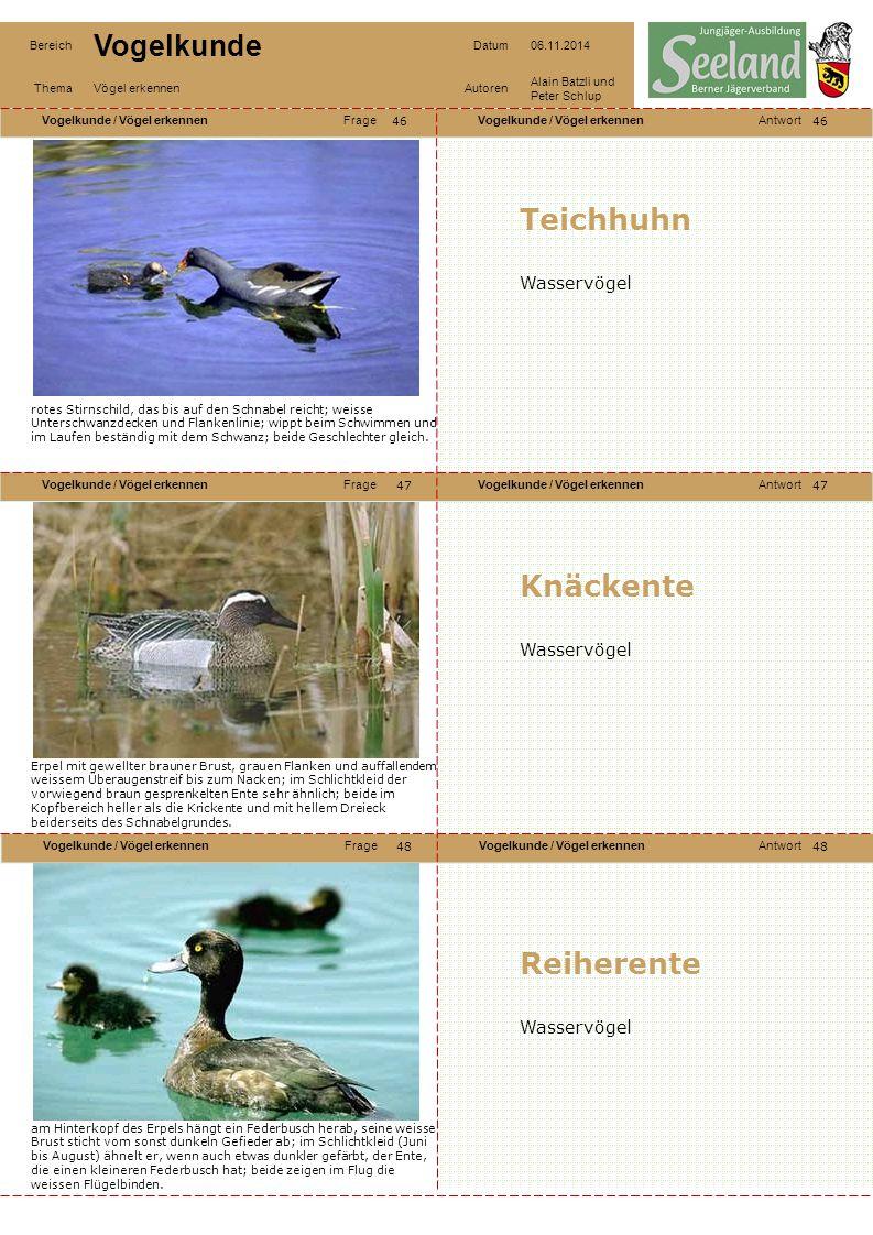 Teichhuhn Knäckente Reiherente Wasservögel Wasservögel Wasservögel 46