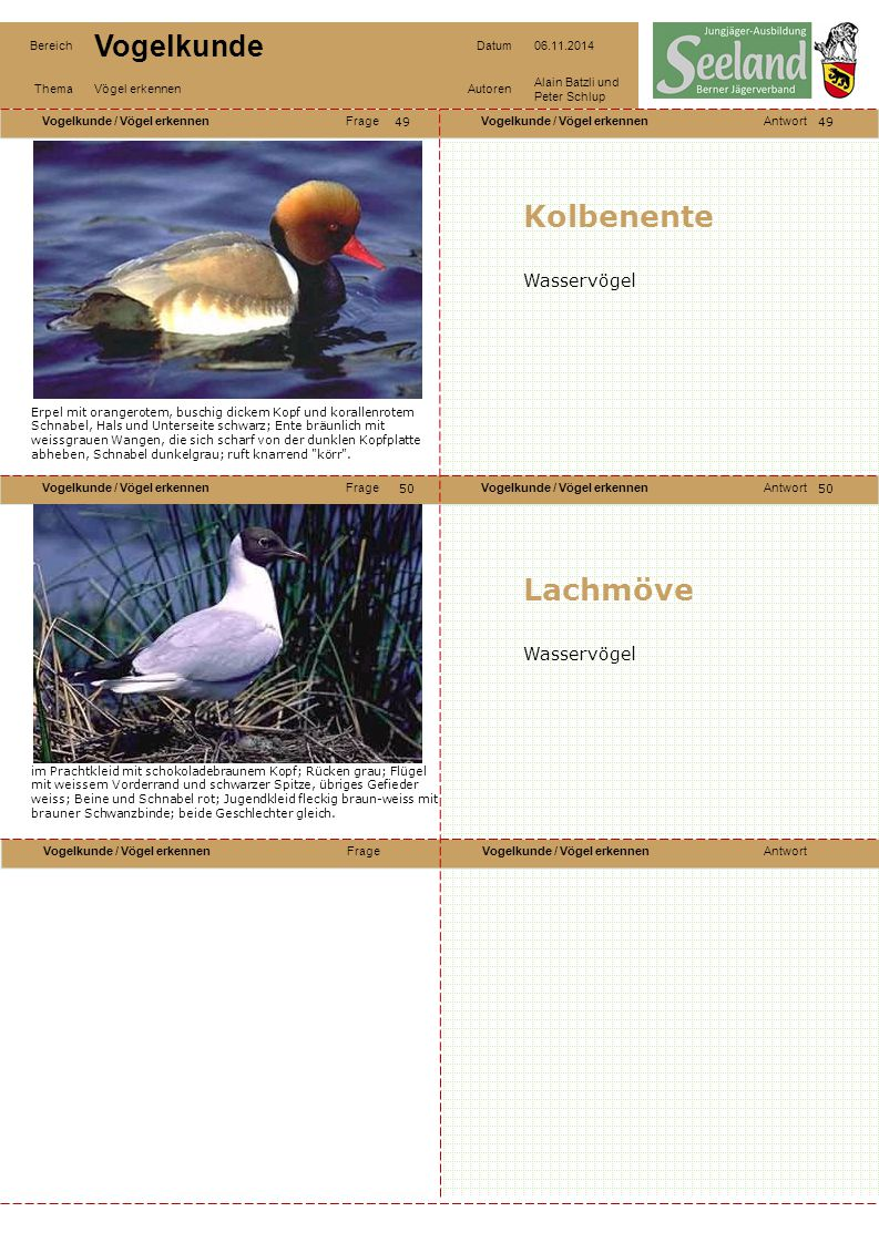 Kolbenente Lachmöve Wasservögel Wasservögel 49 49