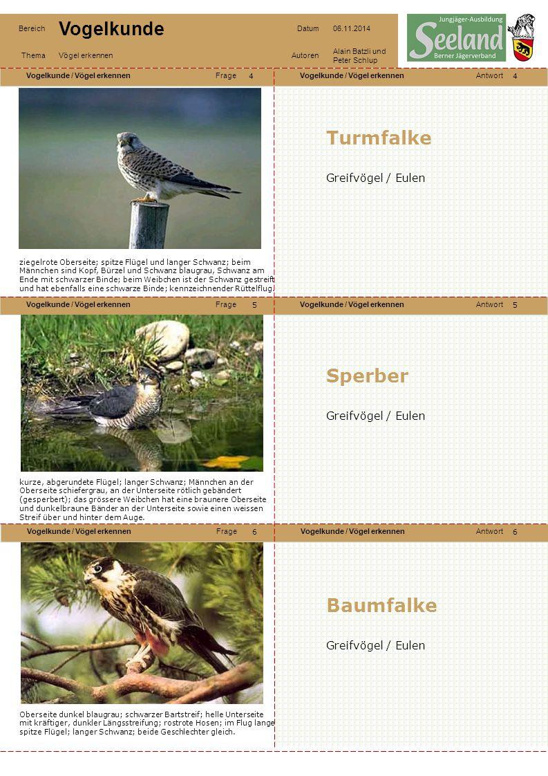 Turmfalke Sperber Baumfalke Greifvögel / Eulen Greifvögel / Eulen
