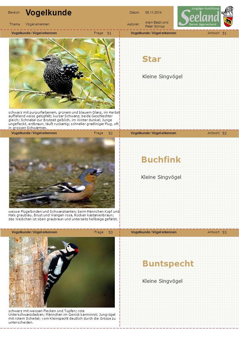 Star Buchfink Buntspecht Kleine Singvögel Kleine Singvögel