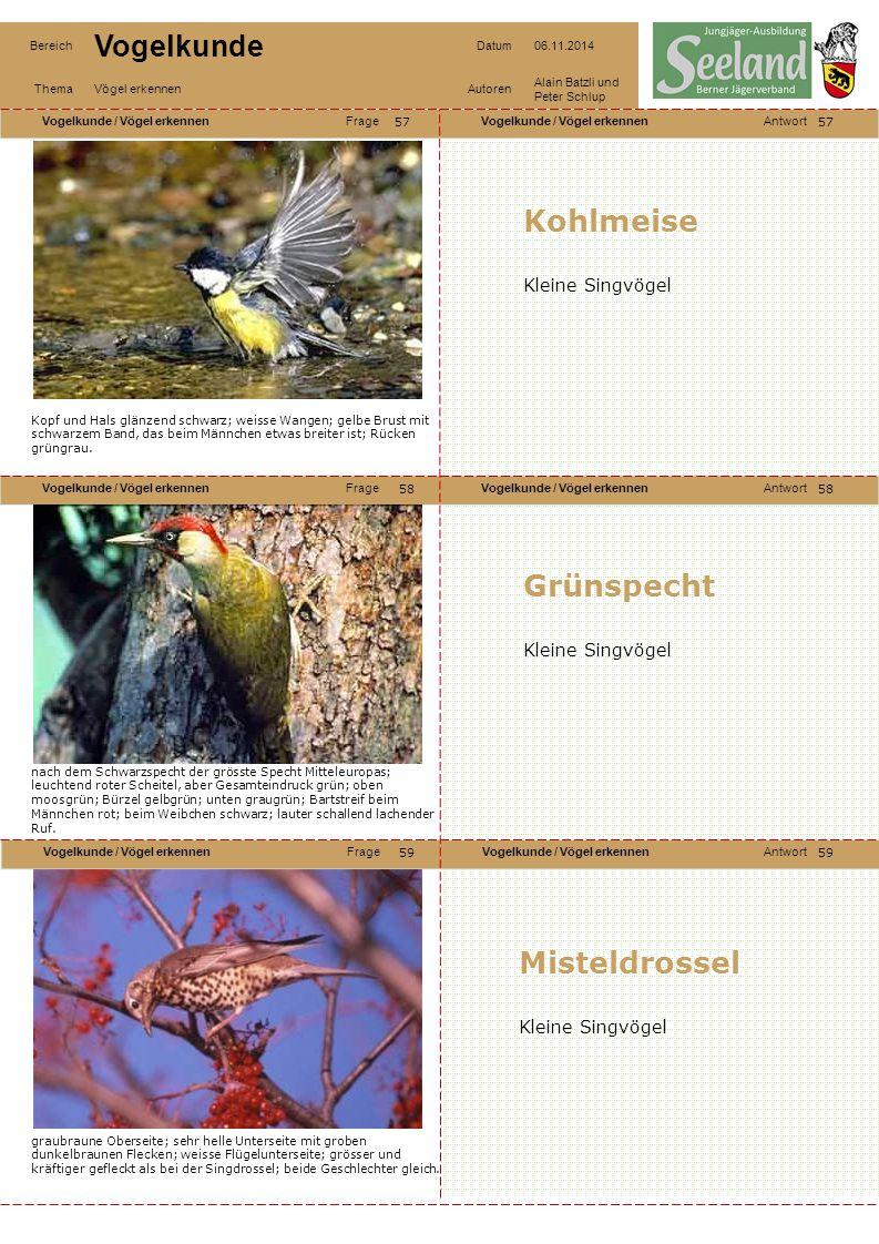 Kohlmeise Grünspecht Misteldrossel Kleine Singvögel Kleine Singvögel