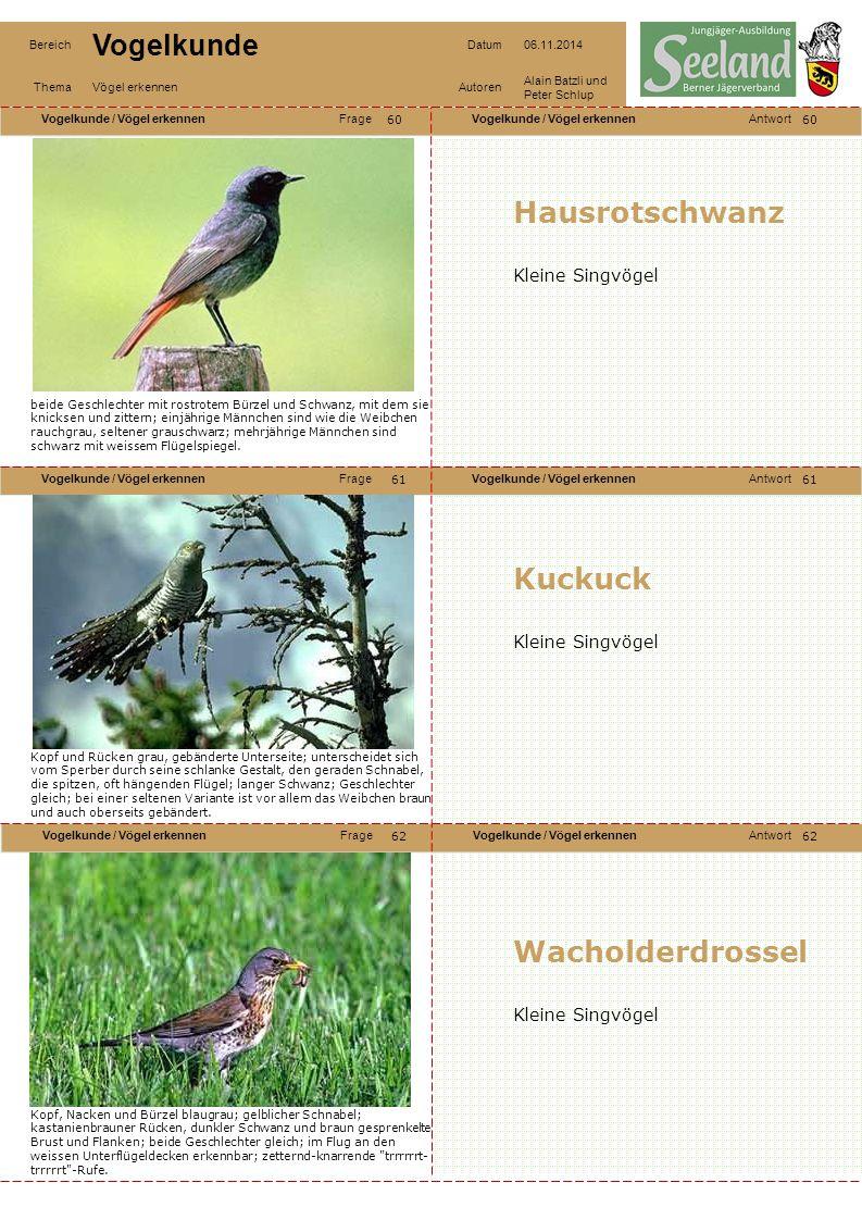 Hausrotschwanz Kuckuck Wacholderdrossel Kleine Singvögel