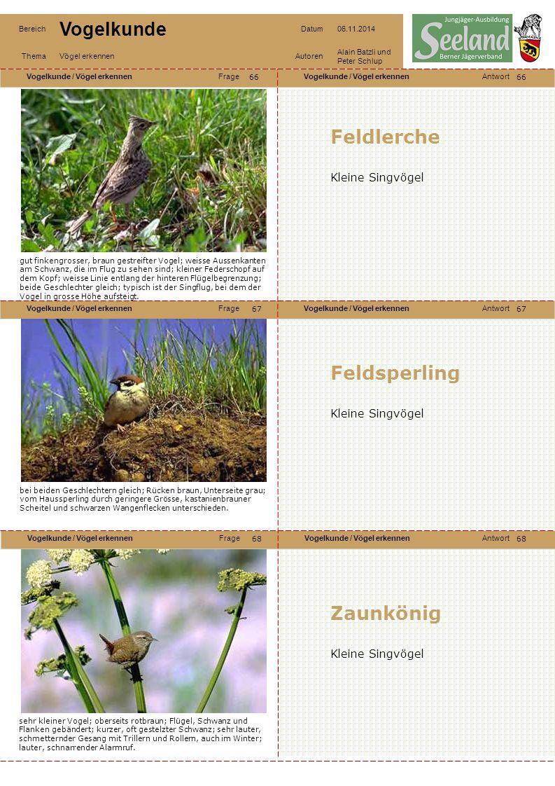 Feldlerche Feldsperling Zaunkönig Kleine Singvögel Kleine Singvögel