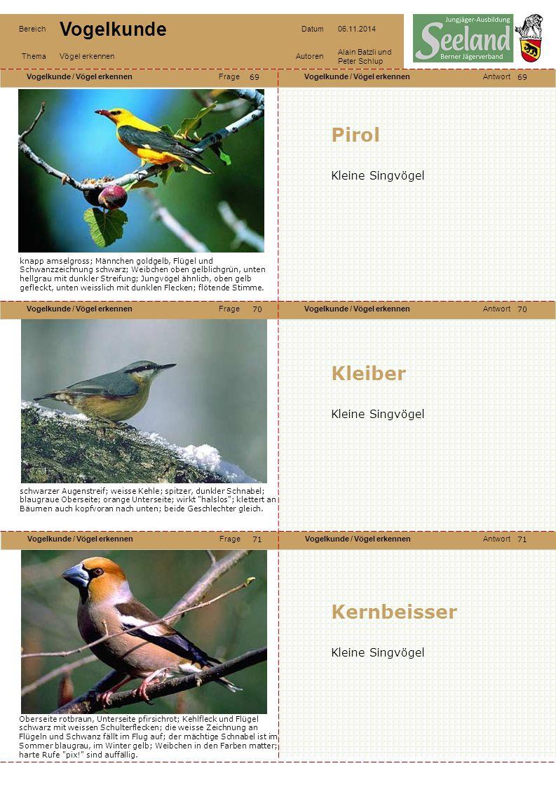 Pirol Kleiber Kernbeisser Kleine Singvögel Kleine Singvögel
