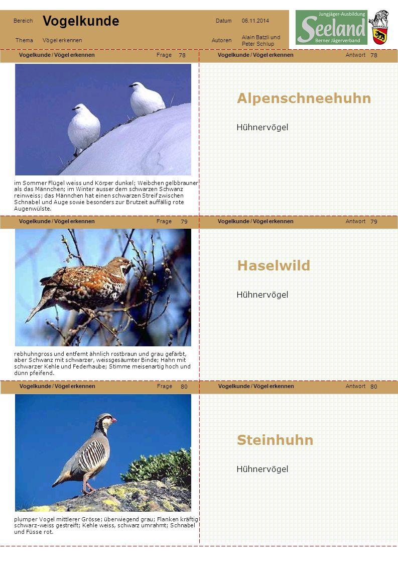 Alpenschneehuhn Haselwild Steinhuhn Hühnervögel Hühnervögel
