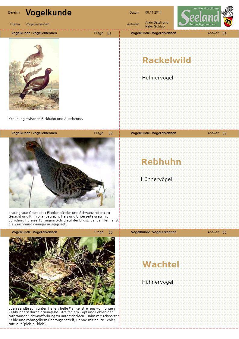 Rackelwild Rebhuhn Wachtel Hühnervögel Hühnervögel Hühnervögel 81 81
