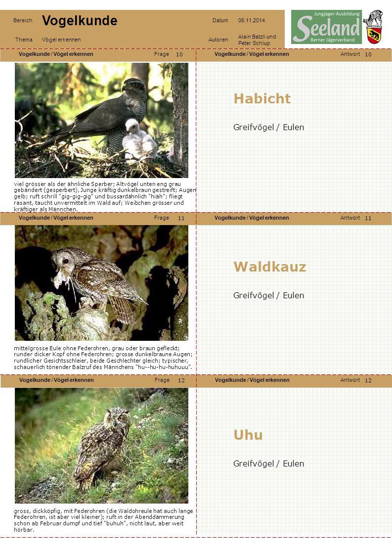 Habicht Waldkauz Uhu Greifvögel / Eulen Greifvögel / Eulen