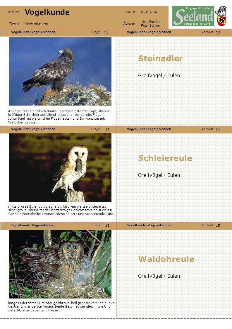 Steinadler Schleiereule Waldohreule Greifvögel / Eulen