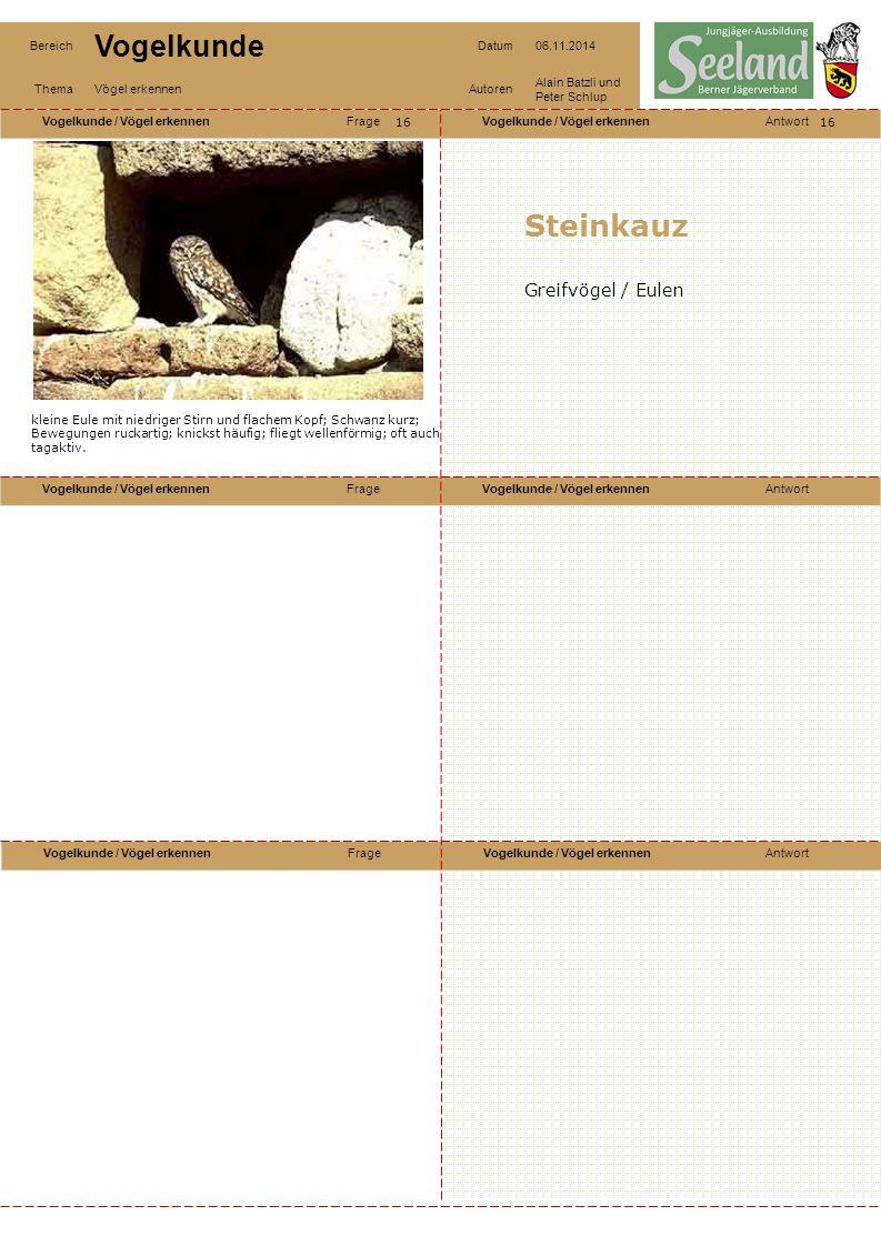 Steinkauz Greifvögel / Eulen 16 16