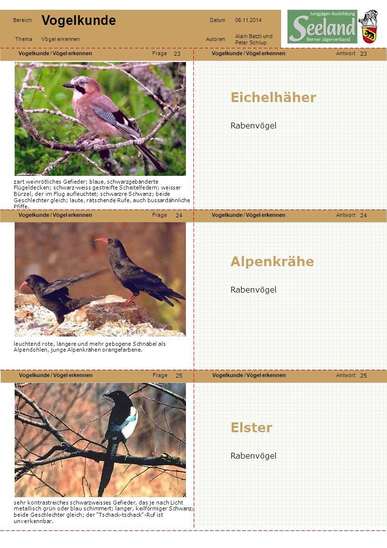 Eichelhäher Alpenkrähe Elster Rabenvögel Rabenvögel Rabenvögel 23 23