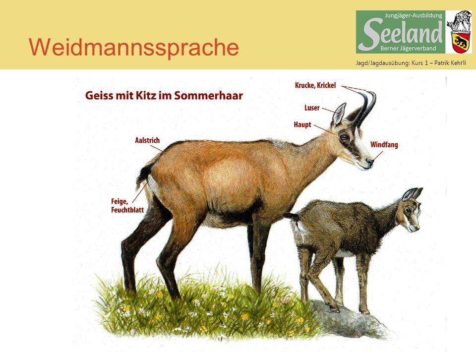 Weidmannssprache