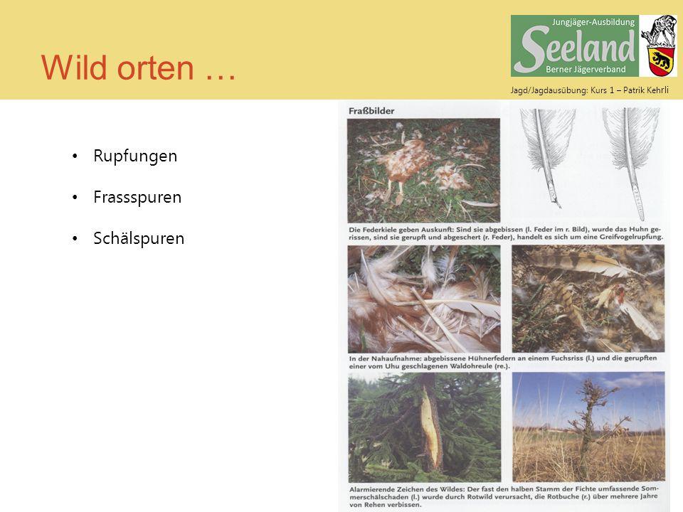 Wild orten … Rupfungen Frassspuren Schälspuren