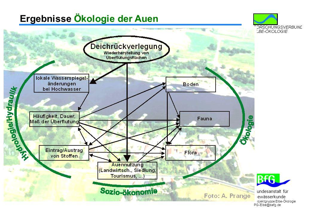 Ergebnisse Ökologie der Auen