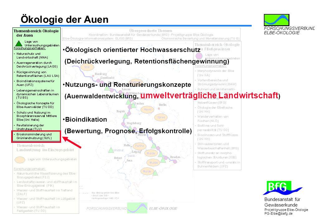 Ökologie der Auen Ökologisch orientierter Hochwasserschutz (Deichrückverlegung, Retentionsflächengewinnung)