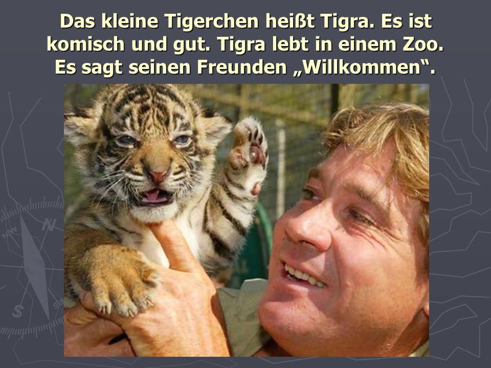 Das kleine Tigerchen heißt Tigra. Es ist komisch und gut