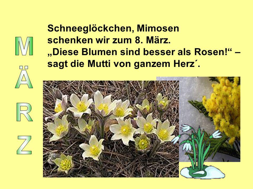 MÄRZ Schneeglöckchen, Mimosen schenken wir zum 8. März.