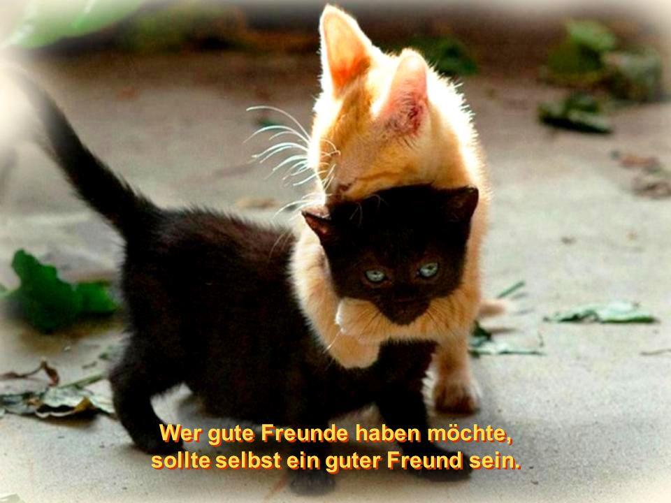 Wer gute Freunde haben möchte, sollte selbst ein guter Freund sein.