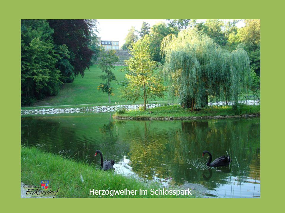 Herzogweiher im Schlosspark