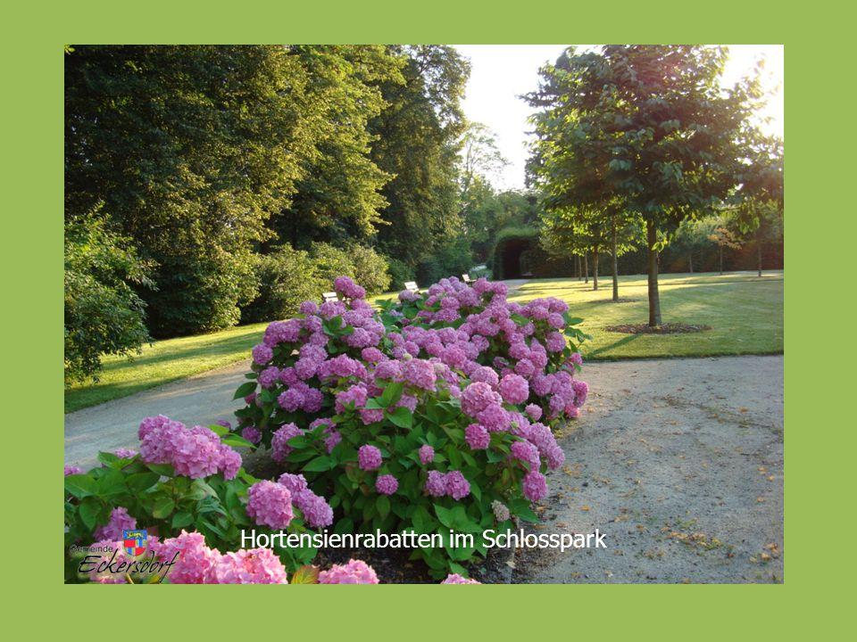 Hortensienrabatten im Schlosspark