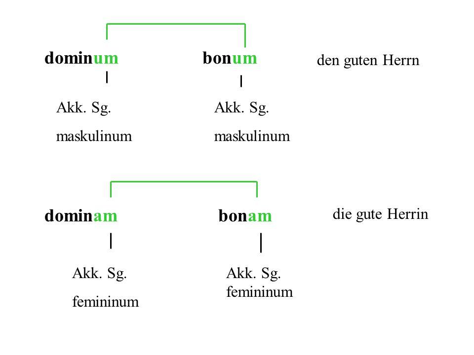 dominum bonum dominam bonam den guten Herrn Akk. Sg. maskulinum
