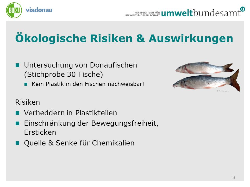 Ökologische Risiken & Auswirkungen