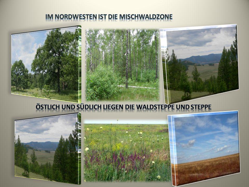 Im Nordwesten ist die Mischwaldzone