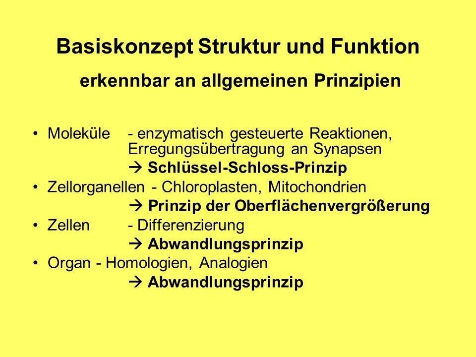 Dorable Struktur Und Funktion Von Zellen Arbeitsblatt Gift ...