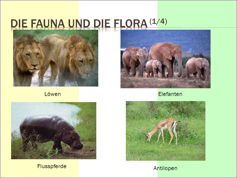DIE FAUNA UND DIE FLORA (1/4)