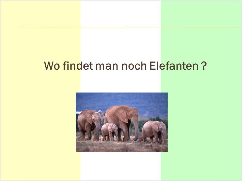 Wo findet man noch Elefanten