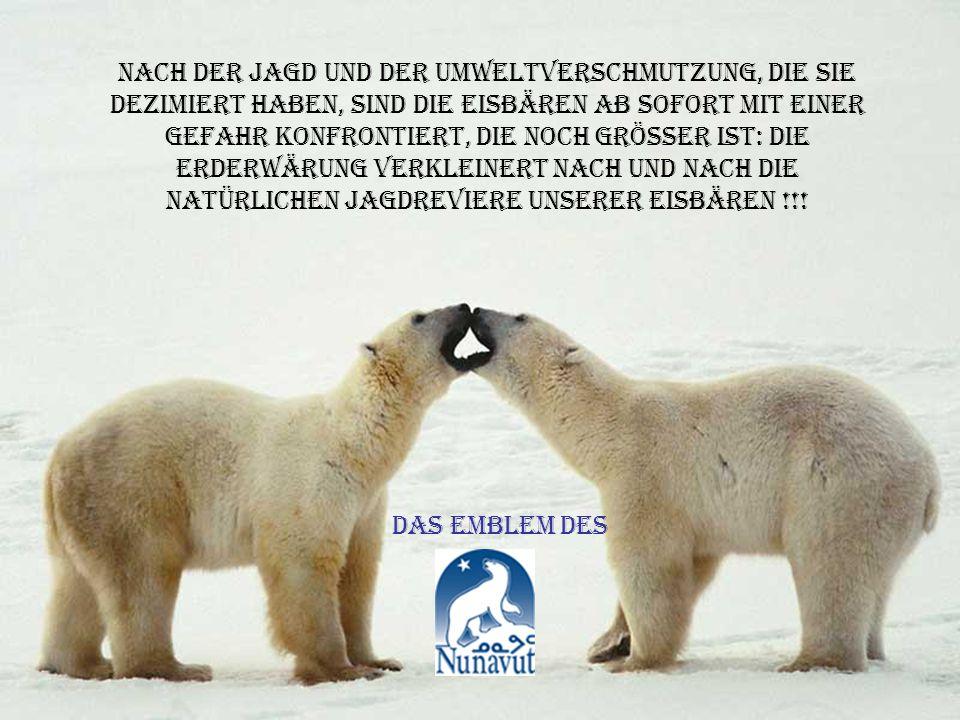 nach der jagd und der umweltverschmutzung, die sie dezimiert haben, sind die eisbären ab sofort mit einer gefahr konfrontiert, die noch grösser ist: die erderwärung verkleinert nach und nach die natürlichen jagdreviere unserer eisbären !!!