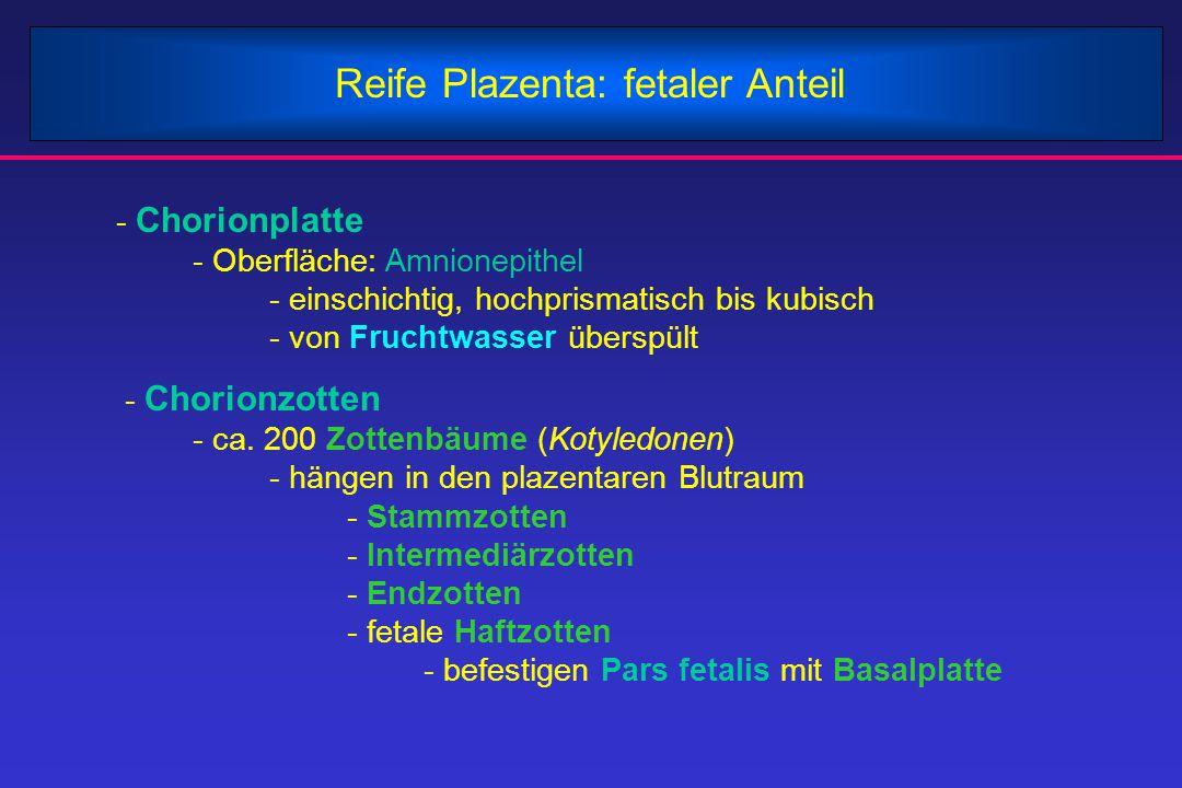 Reife Plazenta: fetaler Anteil