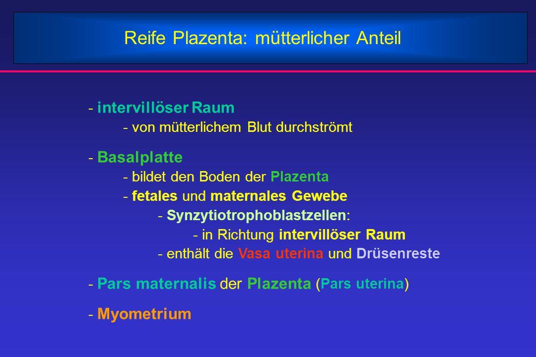 Reife Plazenta: mütterlicher Anteil