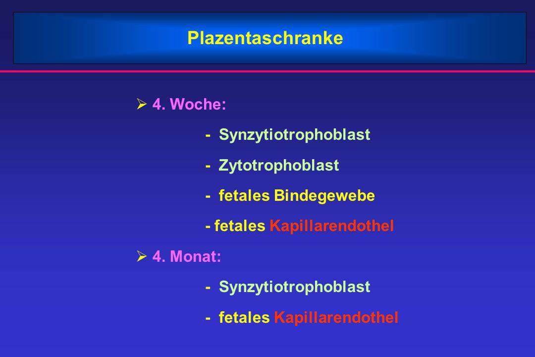 Plazentaschranke 4. Woche: - Synzytiotrophoblast - Zytotrophoblast